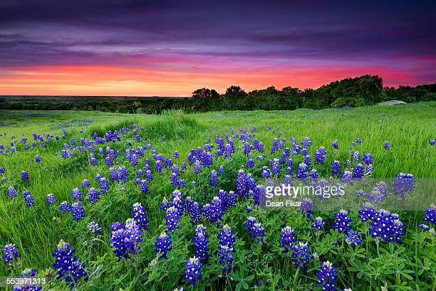 sunset on sugar ridge road - texas bluebonnet stock pictures, royalty-free photos & images