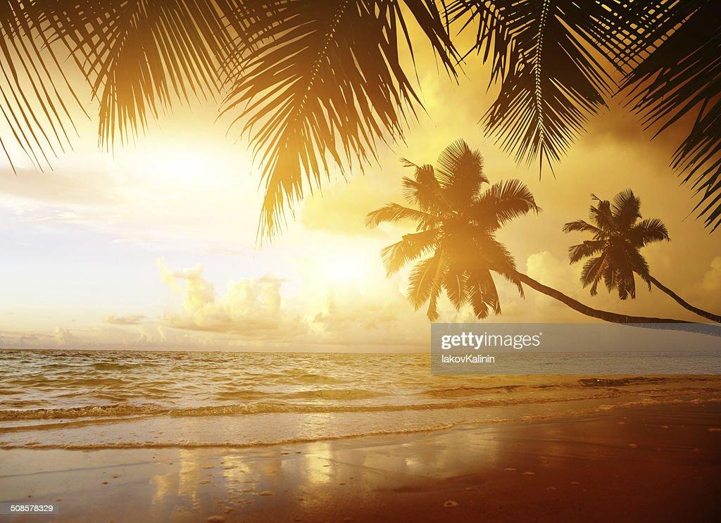 Sonnenuntergang auf der Karibik Meer Strand : Stock-Foto
