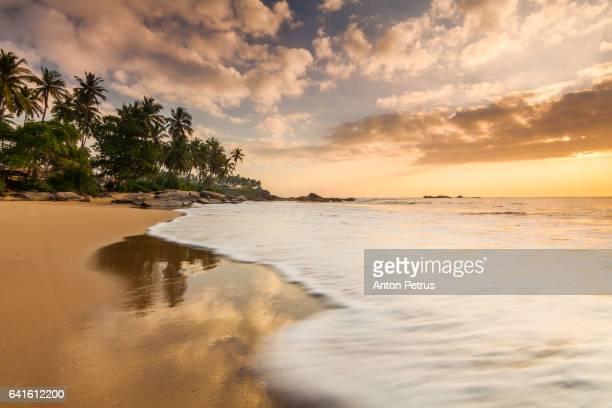 Sunset on the beach with coconut palms. Sri Lanka