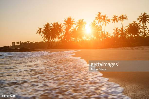 sunset on the beach with coconut palms. sri lanka - tropical sunsets stock pictures, royalty-free photos & images