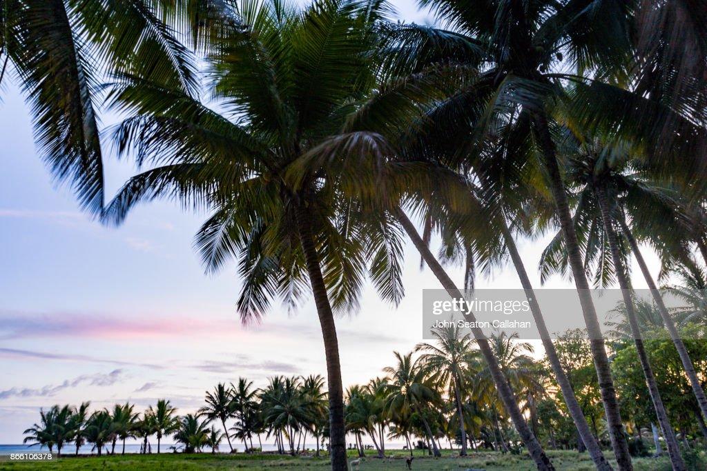 Sunset on the Caribbean Sea : Stock Photo
