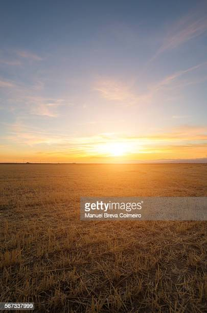 Sunset on the cultivated field