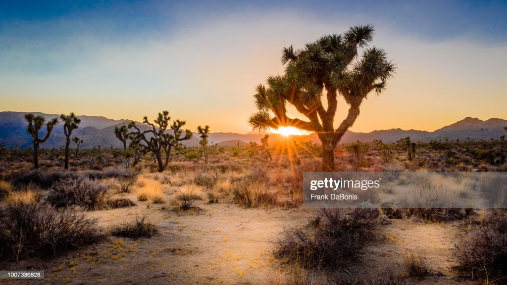Sunset on the desert landscape in Joshua Tree National Park, California : Stock Photo