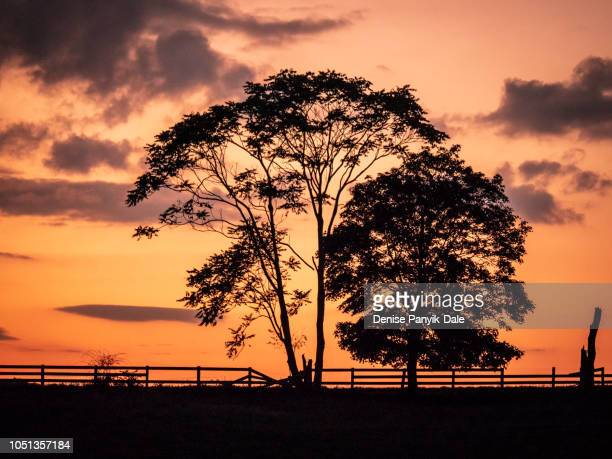sunset on the farm in early fall - panyik-dale stock photos and pictures