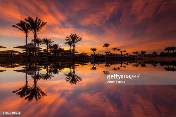 sunset on the sandy beach. red sea, egypt - egypt stock pictures, royalty-free photos & images