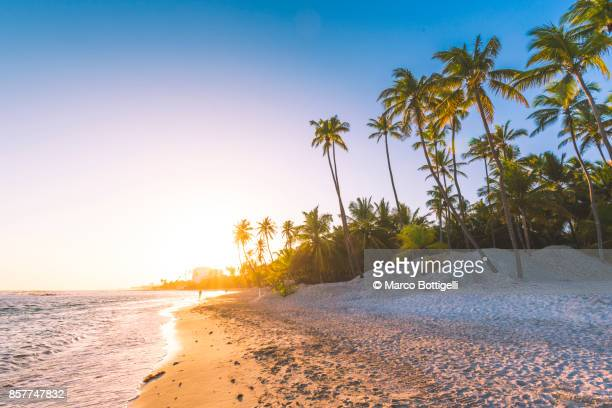 sunset on tropical beach, dominican republic. - praia imagens e fotografias de stock