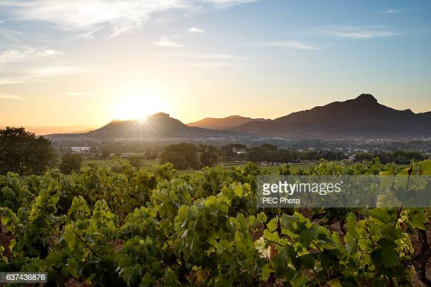 sunset on vineyard - provence alpes cote d'azur stock photos and pictures