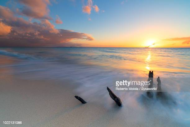Sunset on waves of caribbean sea crashing on tree trunks on Ffryes Beach, Antigua