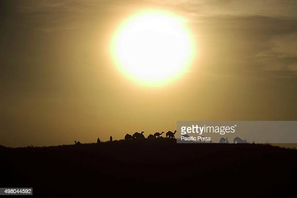 Sunset on Wednesday evening at Pushkar in the desert Indian state of Rajasthan It is one of the world's largest camel fairs and apart from buying and...