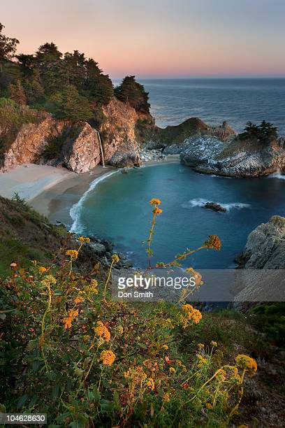 sunset on wildflowers at mcway cove. - don smith stock pictures, royalty-free photos & images