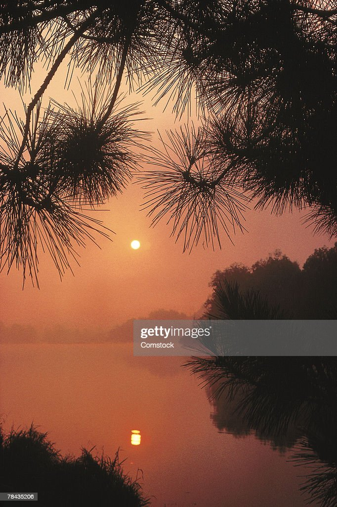 Sunset or sunrise over lake with pine trees : Stockfoto