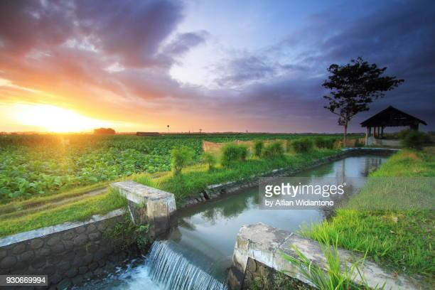 sunset over a farmland - java stock pictures, royalty-free photos & images