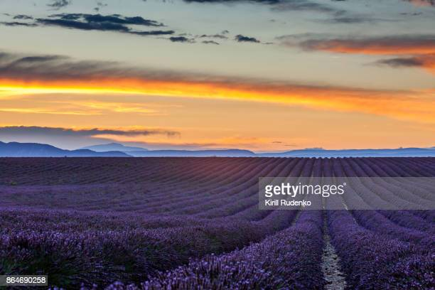 Sunset over a lavender field in Provence, France