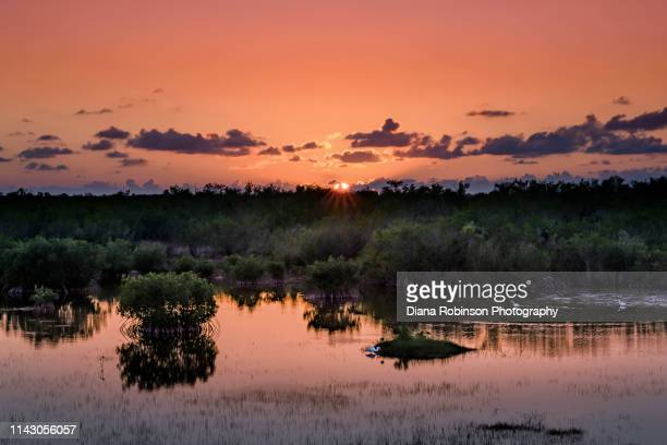 sunset over a marsh at the ten thousand islands national wildlife refuge south of naples, florida - florida nature stock pictures, royalty-free photos & images