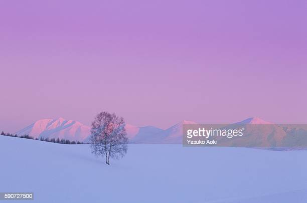 Sunset Over a Snowy Field and Mt. Tokachi. Hokkaido, Japan
