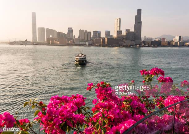 sunset over a star ferry crossing the victoria harbor in hong kong - star ferry stock photos and pictures