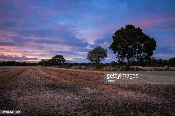 sunset over a stump field with trees and stone wall on a summer evening - エーランド ストックフォトと画像