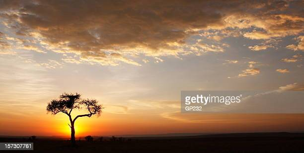 Sunset over African horizon with silhouetted tree