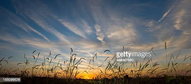 サンセットは、秋のフィールド - 休耕田 ストックフォトと画像