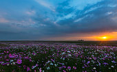 sunset over an infinite meadow cosmos