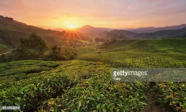 Sunset over Cameron Highlands, Pahang, Malaysia