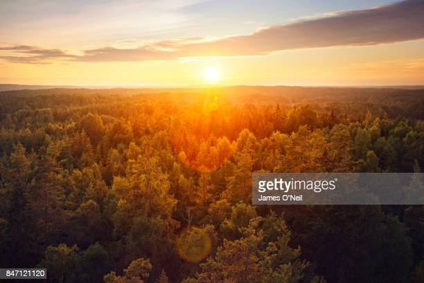 sunset over forest - sweden stock pictures, royalty-free photos & images