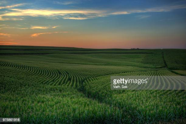 sunset over green field of corn, iowa, usa - iowa stock pictures, royalty-free photos & images