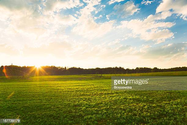 sunset over green meadow - pasture stock pictures, royalty-free photos & images