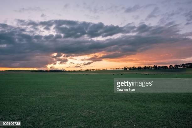 sunset over green meadow - pianura foto e immagini stock