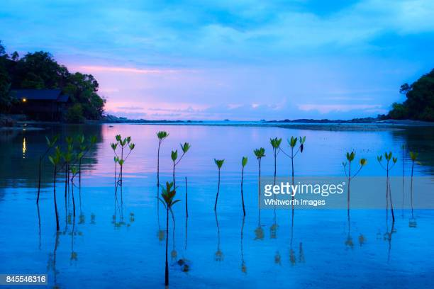 sunset over lagoon at dinawan island, sabah, borneo - mangrove tree stock pictures, royalty-free photos & images
