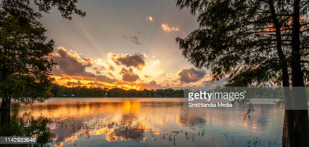 sunset over lake davis in downtown orlando - orlando florida stock pictures, royalty-free photos & images