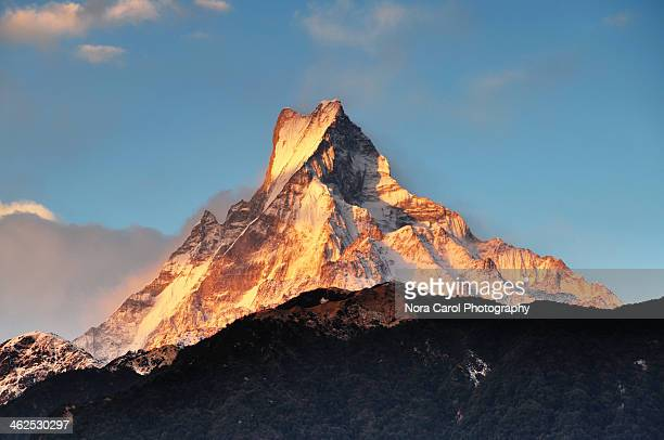 sunset over machapuchare fish tail mountain nepal - machapuchare stock photos and pictures