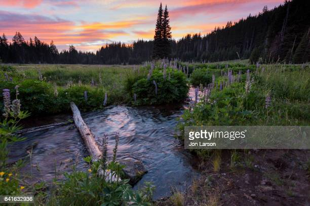 sunset over mesa creek, three sisters wilderness - pacific crest trail stock pictures, royalty-free photos & images