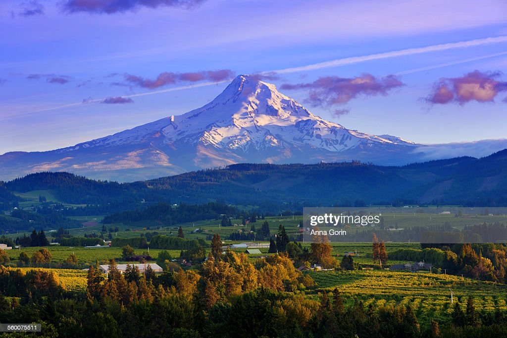 Sunset over Mt Hood and Hood River Valley, Oregon : Stock Photo
