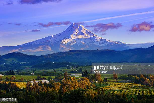 sunset over mt hood and hood river valley, oregon - hood river stock pictures, royalty-free photos & images