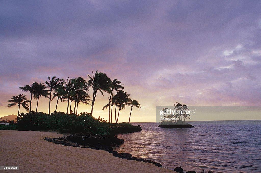 Sunset over palm trees on beach : Stockfoto