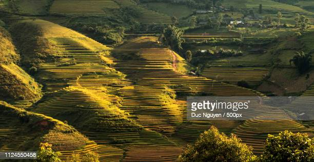 sunset over rice terrace hill - mù cang chải stock pictures, royalty-free photos & images