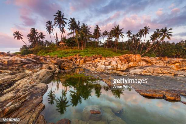 Sunset over rocky beach with palm trees. Sri Lanka