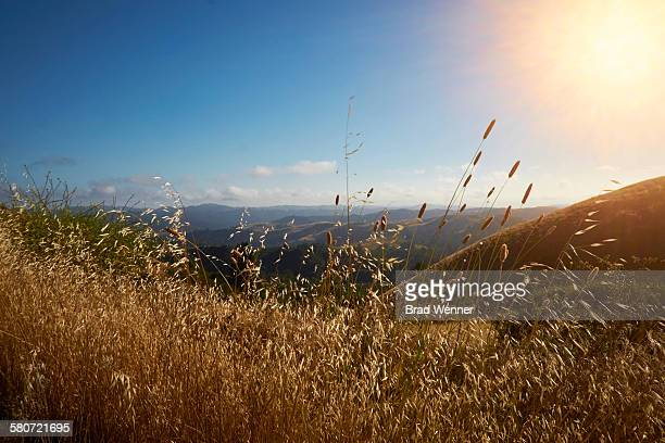 sunset over santa cruz mountains - big basin redwoods state park stock pictures, royalty-free photos & images