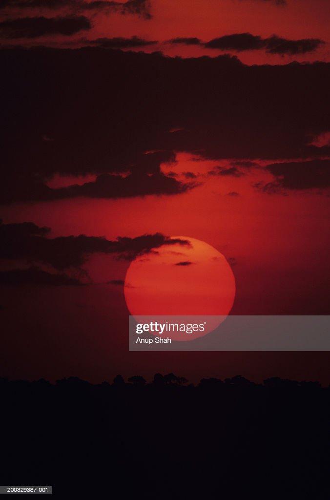 Sunset over savannah, Masai Mara National Reserve, Kenya : Stock Photo