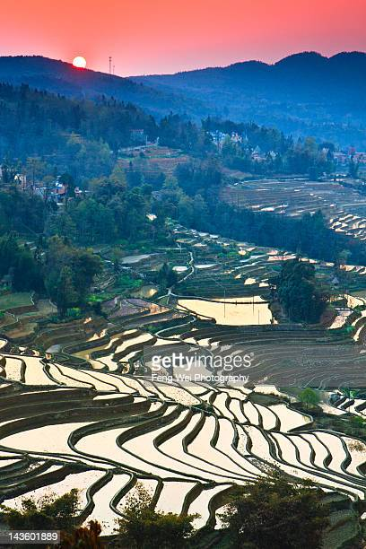 sunset over terraced field at yuanyang, china - yuanyang stock pictures, royalty-free photos & images