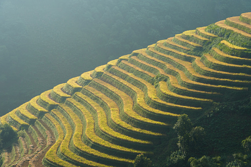 Sunset over terraced rice fields in Mu Cang Chai, Northern Vietnam. - gettyimageskorea