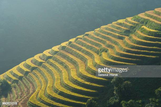Sunset over terraced rice fields in Mu Cang Chai, Northern Vietnam.
