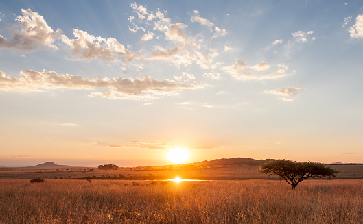 Sunset over the African Plains 683812350