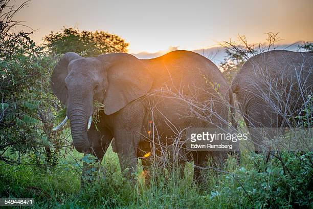 sunset over the big guys - kruger national park stock pictures, royalty-free photos & images