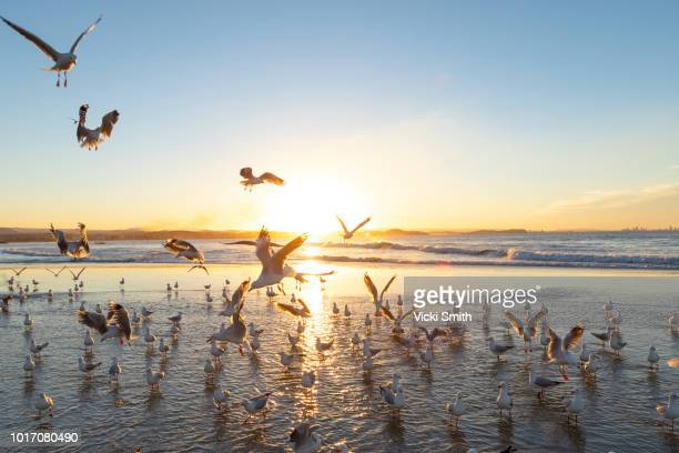 Sunset over the Ocean with seagulls