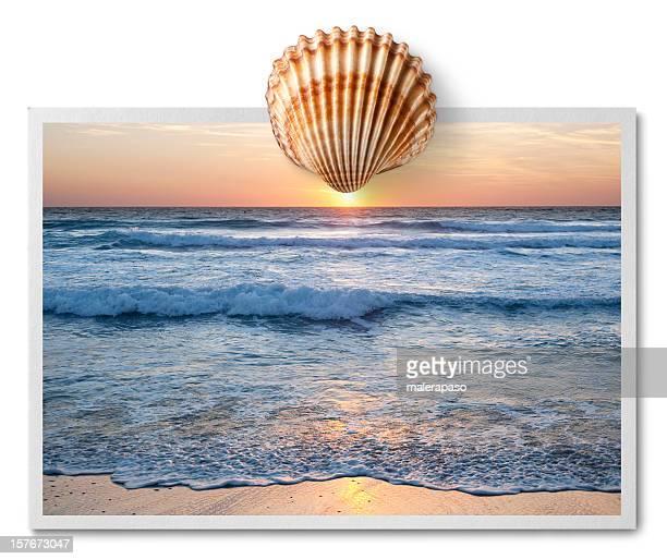 Sonnenuntergang über dem Meer. Postkarte mit shell.