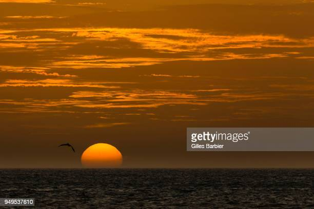 Sunset over the Sea, with flying bird, Punta Gallinas, La Guajira, Colombia
