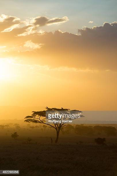 Sunset over the Serengeti National Park in Tanzania