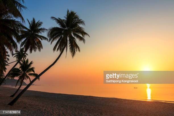 sunset over the tropical beach with coconut palm and boat at koh tao , thailand . koh tao is a paradise island in thailand. silhouettes of palm trees and amazing cloudy sky on sunset at tropical beach - sunset stock pictures, royalty-free photos & images
